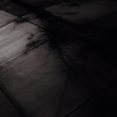 Shad Oh (Zee Jenkins) Tags: square minimalism shadow tree sidewalk sanfrancisco blackandwhite bw