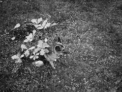 Young Oak (Kirppu_81) Tags: blackandwhite mustavalko epl3 tampere lokakuu