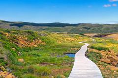 boardwalk in nature (-liyen-) Tags: tablelands newfoundland grosmorne atlanticprovince canada boardwalk nature summer fujixt1 challengeyouwinner matchpointwinner mpt506
