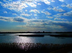 Flight (tina negus) Tags: light sky clouds coast geese lincolnshire pools naturereserve gibraltarpoint thewash
