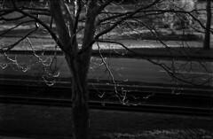 highlights (Nadine Erdmann) Tags: street shadow blackandwhite tree film rain dark grey apx100 agfa rodinal blurr 1100 outofthewindow 2011 standdevelopment agfarodinal agfaagfapanapx film:iso=100 film:brand=agfa developer:brand=agfa developer:name=agfarodinal film:name=agfaagfapanapx100 nadineerdmann filmdev:recipe=6470