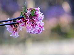 Hello spring! (FeeMail) Tags: park flowers germany deutschland spring walk sunny blumen blooms sonnig dortmund frühling spaziergang westfalenpark