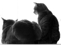 Davey and Juice watching the birdies (harleyannie) Tags: cats cute window cat grey sweet juice tabby gray kitty kitties davey fekine fekines