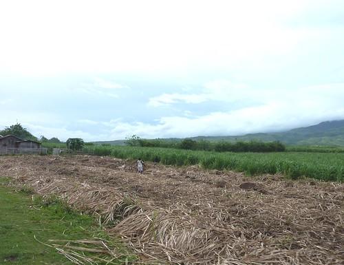 Negros -Bacolod-Savador-San Carlos (14)