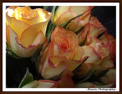 Roses. (::BLewis-Photography::) Tags: uk flowers orange flower macro nature yellow leaf kent fuji naturereserve fujifinepix stodmarsh nnr