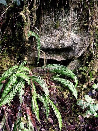 Hiding Stone
