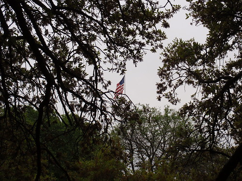 Flag and Trees