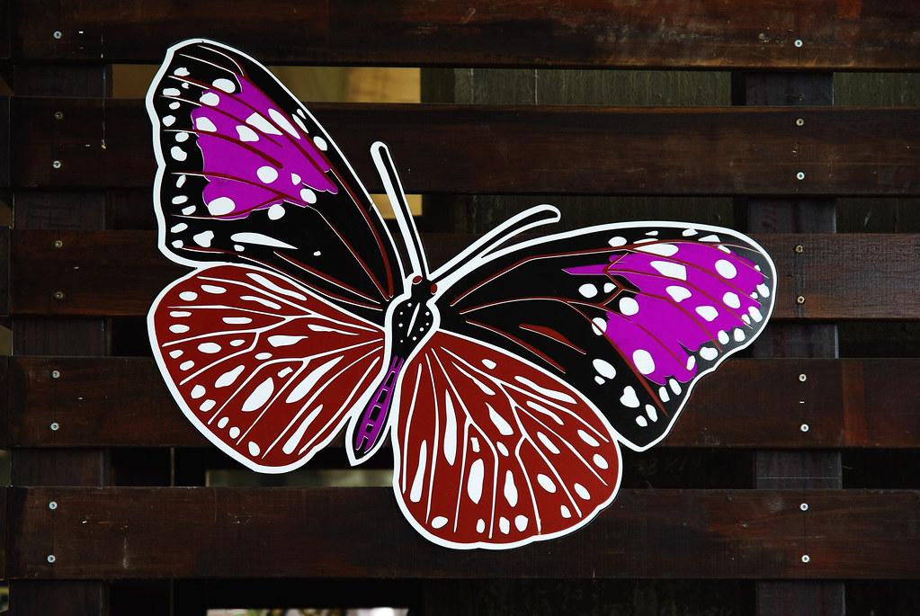 沒看到紫斑蝶的林內行~