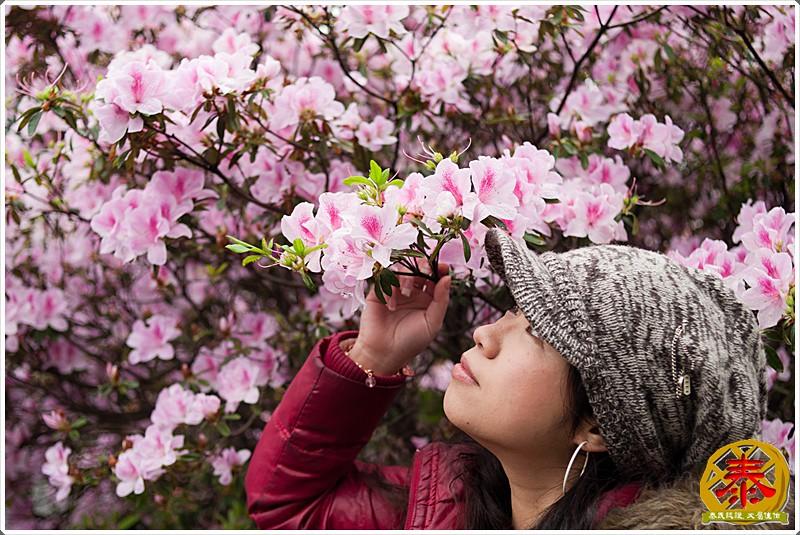 2011-03-26-台大杜鵑花 (6)