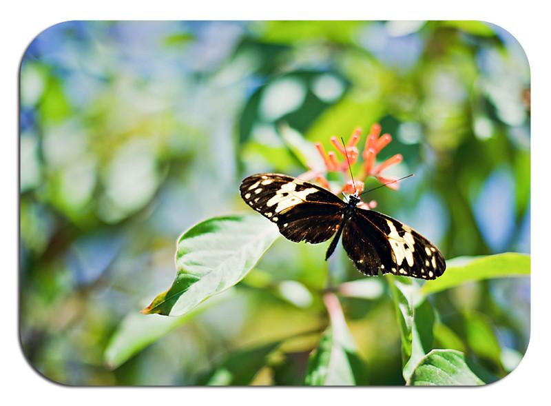 Butterflywrld rd 1
