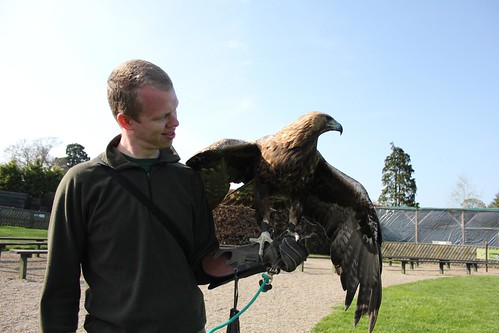 Falconry Day_1534