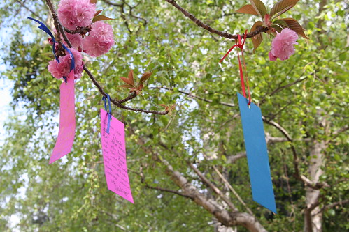Third Grade Cherry Blossom Poetry Festival