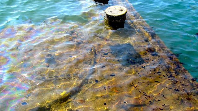 Oil on the surface above the sunken USS Arizona