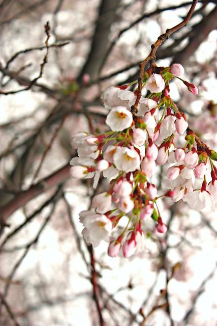 April plantings in Central Parki 064