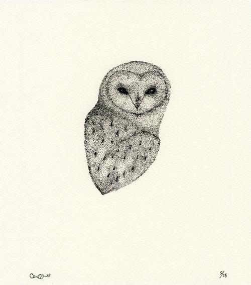 claire-barn-owl5