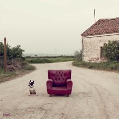 Don Perro III (conflicto de intereses) (Juan J.M.P) Tags: portrait retrato paisaje bulldog perro don dod frances jmp mygearandme
