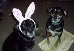 LolaTut_bunny_411