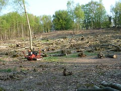 "Coppice Wood Extraction • <a style=""font-size:0.8em;"" href=""http://www.flickr.com/photos/61957374@N08/5631263352/"" target=""_blank"">View on Flickr</a>"