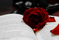 """Sant Jordi"" (hunter of moments) Tags: barcelona flower rose book nikon flor rosa libro santjordi d5000 bestpeopleschoice"