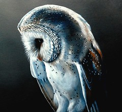 Barn Owl 1 (Buzzard2001) Tags: owl wise feathered nocternal mygearandme mygearandmepremium mygearandmebronze mygearandmesilver mygearandmegold mygearandmeplatinum mygearandmediamond ringexcellence dblringexcellence tplringexcellence flickrstruereflection1 flickrstruereflection2 flickrstruereflection3 flickrstruereflection4 flickrstruereflection5 flickrstruereflection6 flickrstruereflection7 eltringexcellence flickrstruereflectionlevel7 flickrstruereflectionexcellence allofnatureswildlifelevel1 allofnatureswildlifelevel2 allofnatureswildlifelevel3 allofnatureswildlifelevel4 allofnatureswildlifelevel5 allofnatureswildlifelevel8 allofnatureswildlifelevel6 allofnatureswildlifelevel7 allofnatureswildlifelevel9 allofnatureswildlifelevel10 flickrsfinestimages1 flickrsfinestimages2 flickrsfinestimages3 me2youphotographylevel2 me2youphotographylevel3 me2youphotographylevel1 freedomtosoarlevel1birdphotosonly me2youphotographylevel4 flickrstruereflectionlevel6