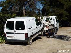 076-dia08-RIPhorridoauto (Spiniflores) Tags: florencia horridoauto