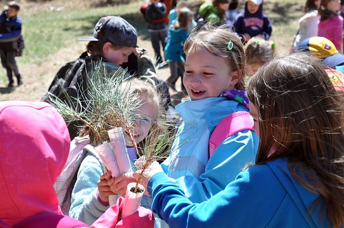Students from Discovery Campus Elementry School compare trees during the kids4Trees Event on the Pike National Forest.