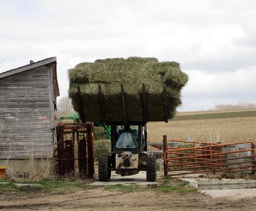 restocking hay