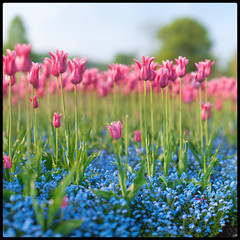 Pink n Blue (Edd Noble) Tags: autostitch panorama nikon dof bokeh f14 85mm nikkor d3