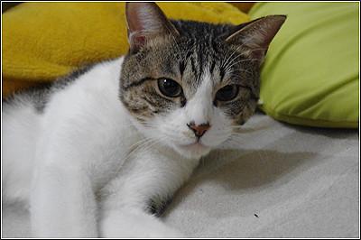 今日の猫(2011-04-28)