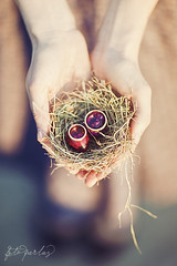 Cute Easter Details (Foto Perlas) Tags: wedding sunset sunlight cute birds easter moments photographer sweet 85mm posing naturallight eggs 12 fullframe canondslr birdnest weddingrings f12 weddingphoto easterdecoration weddingphotography mark2 weddingdecoration birdphotography humanhands inhands 5dmkii tadaocern wwwtadaocercom