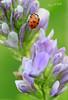 ما أجمل الحياة (mzna al.khaled) Tags: flowers red flower macro green colors beautiful lady focus arabia natrue 105mm ماكرو abigfave macrolife naturethroughthelens
