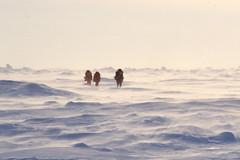 Skiing in High Winds (Weber Arctic Expeditions) Tags: ice richard misha weber northpole frostbite arcticocean polarexpedition malakhov wardhuntisland fischerskis polarbridge polartraining capearkticheskiy dimitrishparo shparo