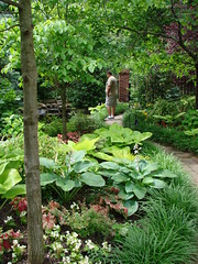 Landscaped backyard w/pond (DiPics) Tags: summer tree garden private landscape waterfall pond backyard gardening secret border host shade koi lush caladium pavers lafayettesquare frvr