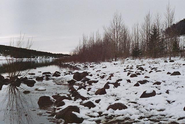 Heiðlóa við Hvaleyrarvatnið