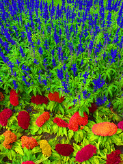 Flowers from Wawel Cathedral (monchovallejos) Tags: flowers flores nature colors hojas leaf flora colores photoshopeuropaejerciciosocio
