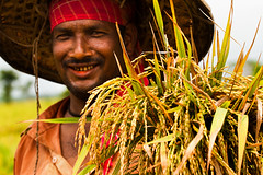 ...And the country smiles [..Sunamganj, Bangladesh..] (Catch the dream) Tags: people nature smile rice paddy vibrant agrarian farming growth crop bunch farmer agriculture society economy bangladesh spikelet economicgrowth sunamganj catchthedream mohammadmoniruzzaman gettyimagesbangladeshq2
