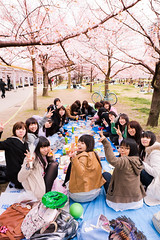 Hanami party : Osaka Castle, Japan / Japn (Lost in Japan, by Miguel Michn) Tags: pink flowers friends people flores primavera girl smile japan garden spring chica gente rosa cherryblossom  sakura osaka sonrisa amigas hanami  osakacastle japn   cerezos