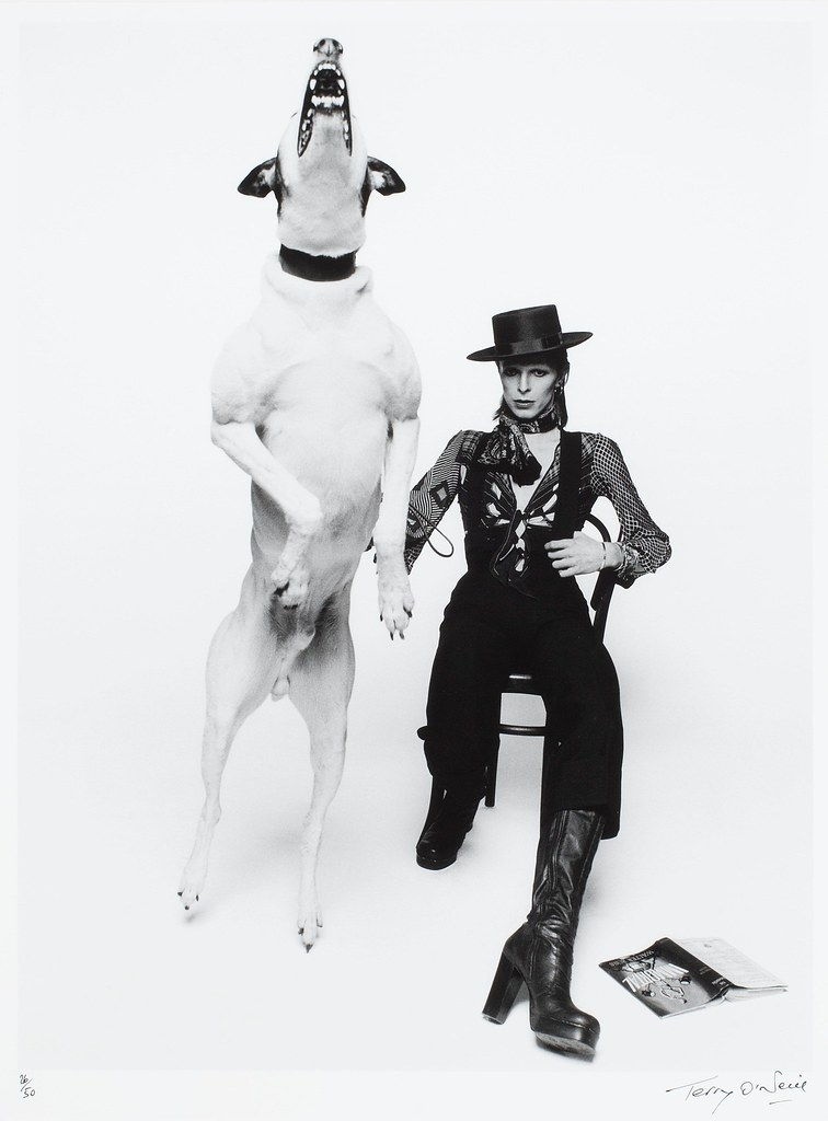 Terry O'Neill Diamond dogs.