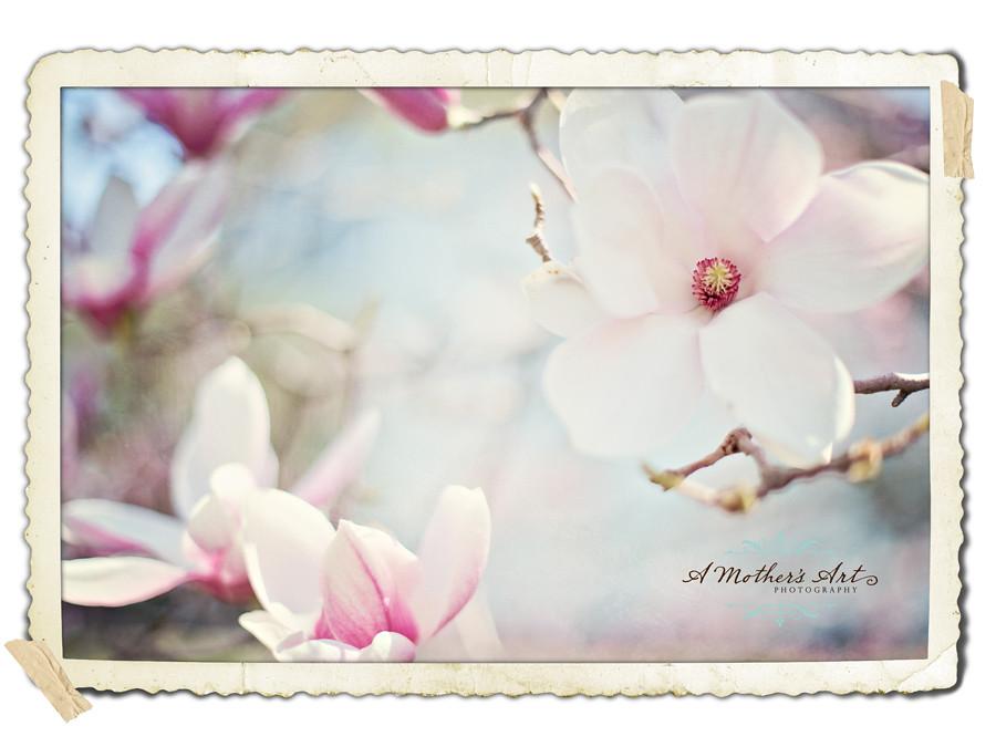 20/52 - Magnolias