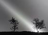 Revelations(explore-May 16, 2011 #360) (kenny barker) Tags: trees light bw art monochrome birds bravo panasonic g1 crows sunray saariysqualitypictures redmatrix sbfmasterpiece sbfgrandmaster