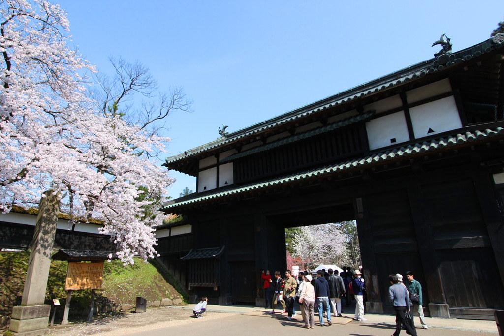 Hirosaki Park Sakura (4)