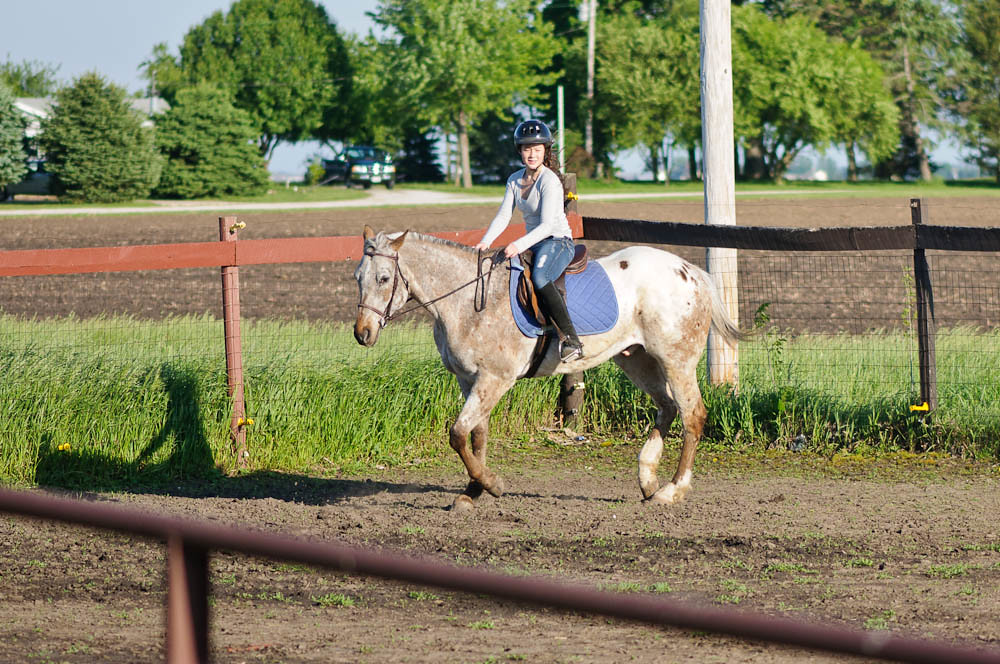 Making the Turn horses appaloosa