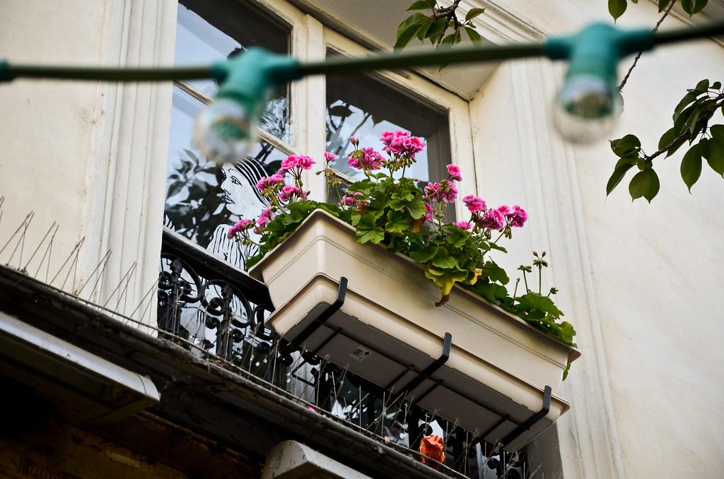 Fenêtre fleurie