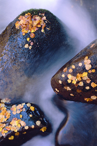 """Leaves, Rocks and Stream"" by Sam Roberts"