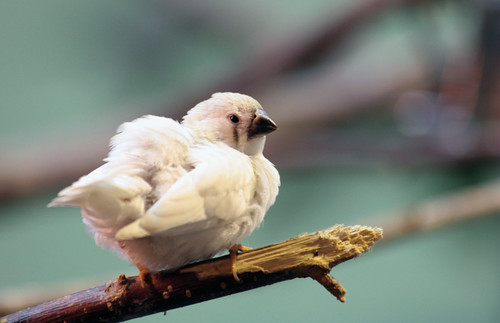 süßes Vögelchen