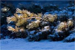 Хатырские картинки (9) (Магадан) Tags: anadyr chukotka анадырь чукотка чукчи луораветланы luoravetlan