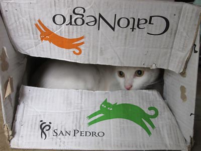 "white cat inside a ""black cat"" box :D"