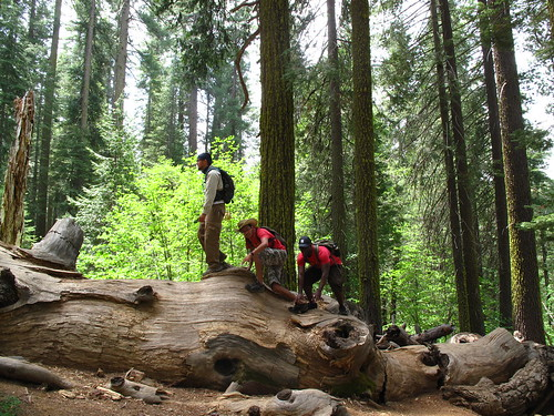 Junior, Rene and Sean atop a dead Sequoia