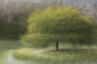 Arboretum Impressionist 1