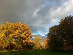 . Pushkin. (presteza777) Tags:       pushkin tsarskoyeselo autumn automne autunno trees park